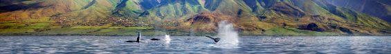 Whales West Maui Mountains