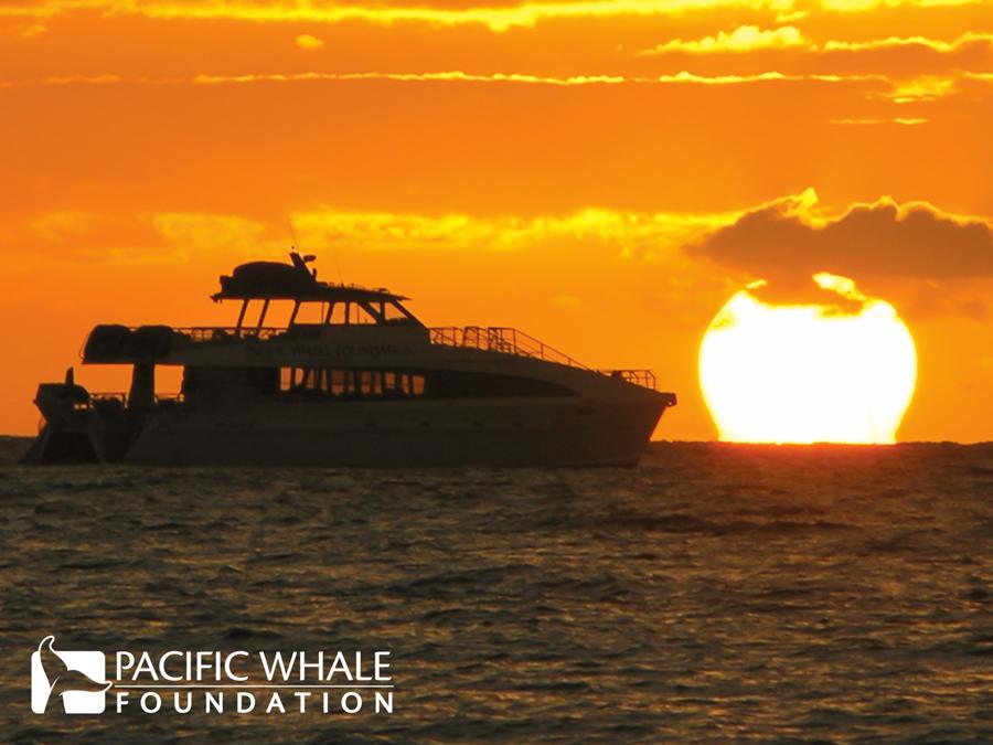 Ocean Odyssey at sunset