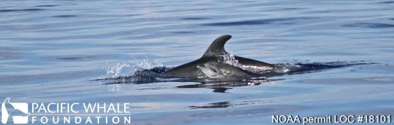 Dolphin Header Photoshopped_Edit