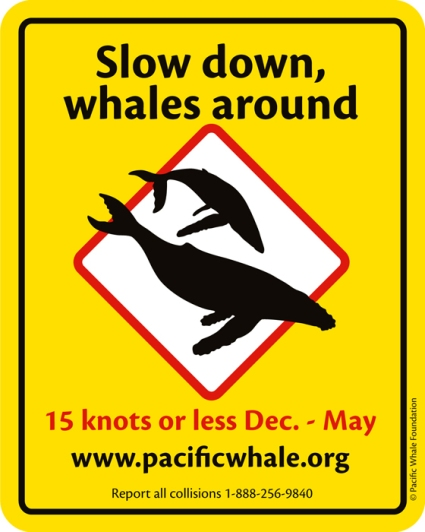 be whale aware-slowdown sticker