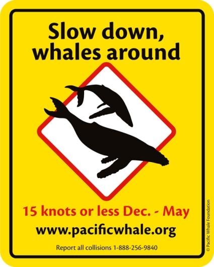 be whale aware-slowdown sticker