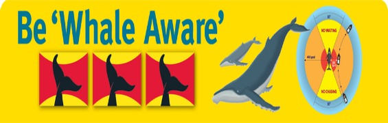 be-whale-aware-top-header blog