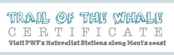 "Get your ""Trail of the Whale"" certificate at our Ocean Store"
