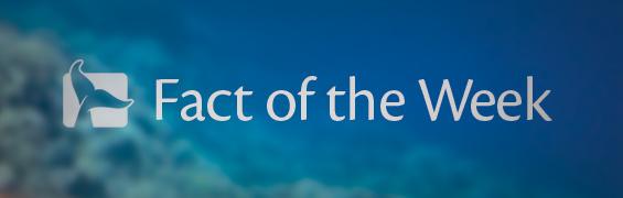 blog-fact-of-the-week-header