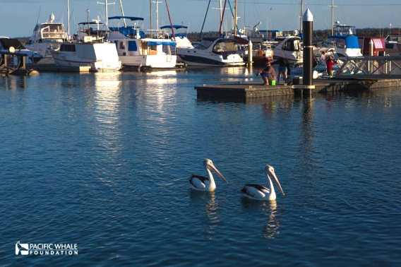 The Urangan Harbour is busy with whale watching tours, but in between trips you can sense the tranquility of this sleepy town.