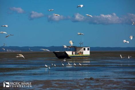 Low tide at Urangon Harbour