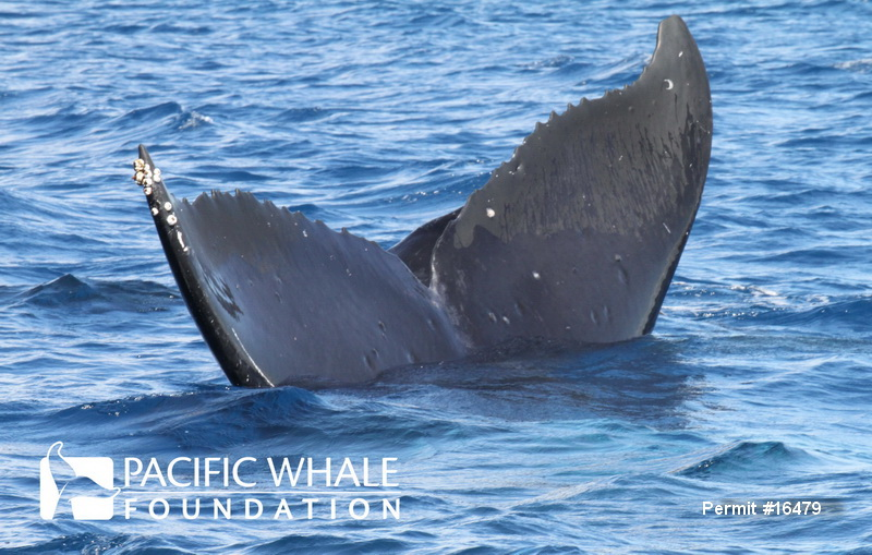 an analysis of the topic of the pacific whale foundation