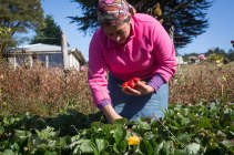 Chiloé has been internationally recognized by FAO as an Ingenious Agricultural Heritage site of the world for its agricultural culture, biodiversity and its traditional knowledge and practices.
