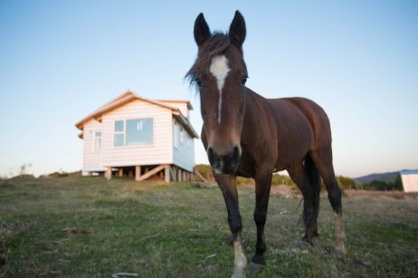 Friendly horses roam free from neighboring properties that are often range beyond 20 acres.
