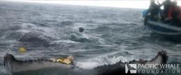 rescate ballena_resize