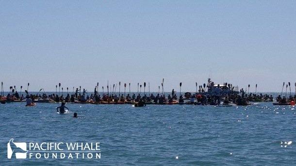 Paddlers held up their paddles for a minute of silence to honor the importance of our oceans and marine life.