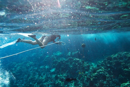 PWF leads best practices for the environment such as mooring our vessels at snorkel sites instead of dropping anchor on reefs.