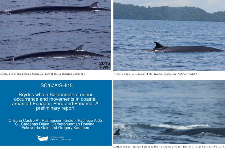One of the most highly regarded papers was focused on photo-identification of Bryde's whales in Latin America.