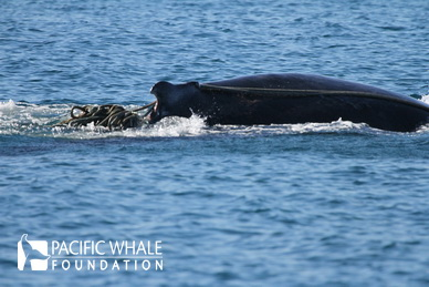 Whale 2 Resize