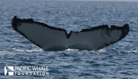Whale #0680, Uluru
