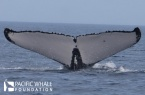 Whale #2177