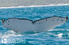 Whale #3586