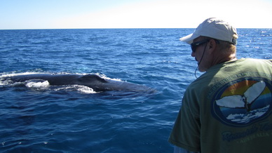 Greg Kaufman founded Pacific Whale Foundation in 1980.