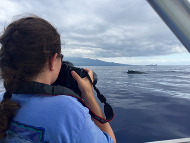 Researchers collect photos of humpback whales to use for photo-identification