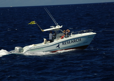 Our dedicated research vessel, the Ocean Protector