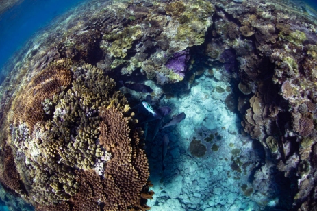 Lagoon Coral on Lady Elliot #aquatica