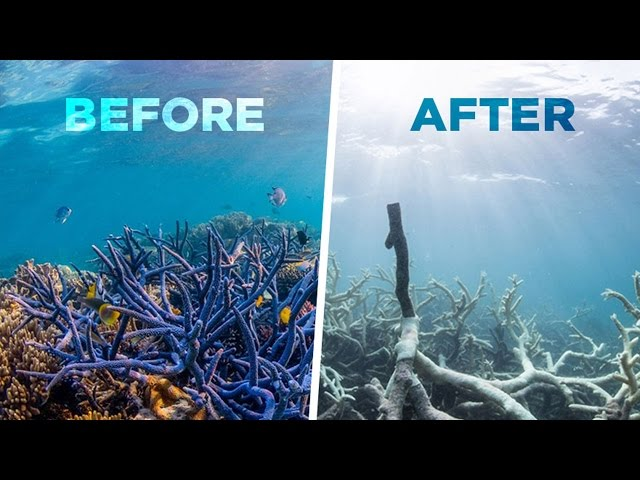 How To Protect Coral Reefs For World Oceans Day Pacific